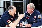 Helmut Marko: 'Geen eenzijdige oplossing voor Toro Rosso'