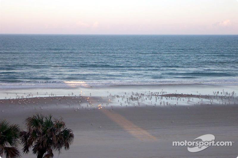 Sand pipers on Daytona Beach