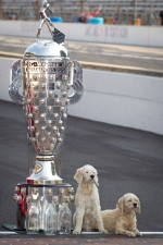 Winners photoshoot: the dogs of Dario Franchitti, Target Chip Ganassi Racing Honda