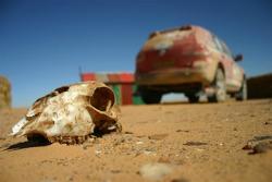 A roadkill in the desert