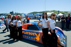 Lovely girls of Playboy on the grid