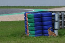A rabbit trackside,  ADAC GT Masters Oschersleben I 2010