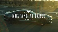 Mustang at Large | Ford Mustang, in Ordos, Inner Mongolia