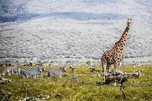Galeria - WRC i powrót do Afryki