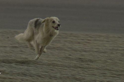 Vídeo: un perro detuvo la FP2 del GP de Bahrein de F1