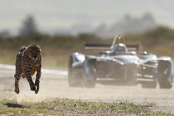 Video: Bir çita mı daha hızlıdır yoksa Formula E aracı mı?