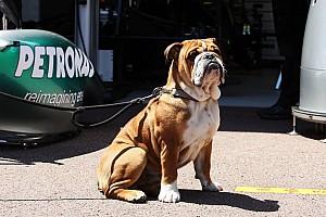 Hamilton'ın köpeği Roscoe günlük 700 dolar kazanıyor