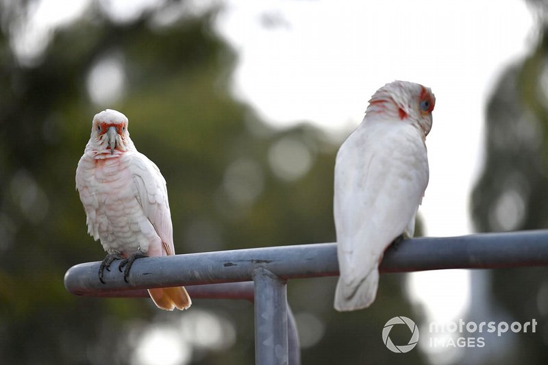 Birds perch on a railing