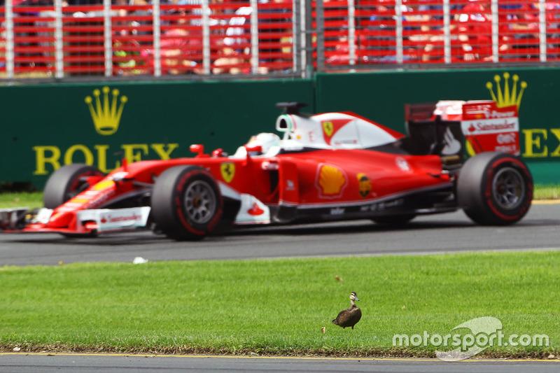 28: Гран Прі Австралії, Альберт-Парк. Себастьян Феттель, Ferrari SF16-H, проїжджає качку