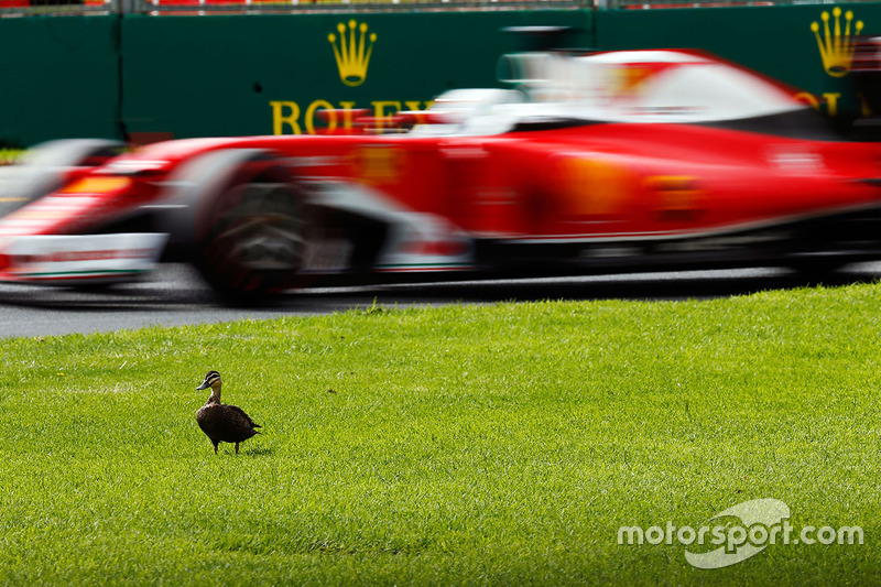 9. Sebastian Vettel, Ferrari SF16-H pasa un pato