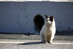 A cat rests in the pit lane