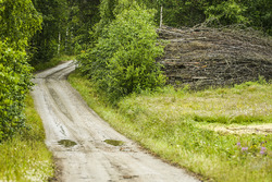 Rally Finland atmosphere