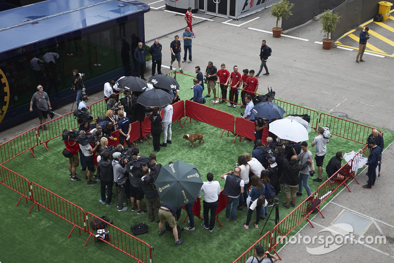 Lewis Hamilton, Mercedes AMG F1, his dog in the drivers media pen in the paddock