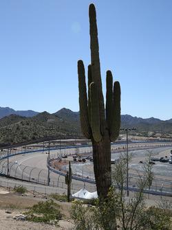 Phoenix cactus