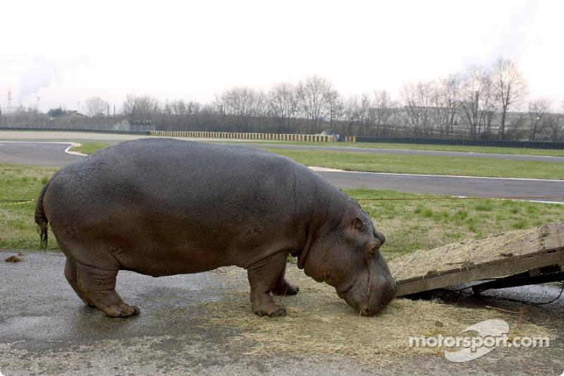 The new Ferrari test driver at Fiorano