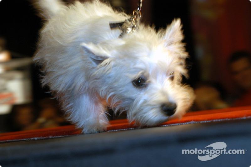 Tony Kanaan's dog Lucky