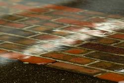 Lluvia en el pitane del Indianapolis Motor Speedway