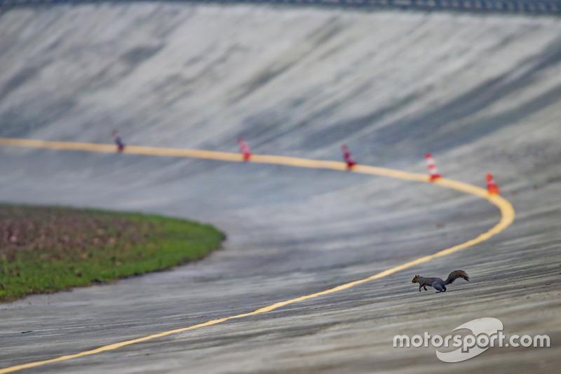 Una ardilla el óvalo de Monza