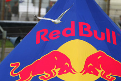 A seagull flies past the Red Bull advert