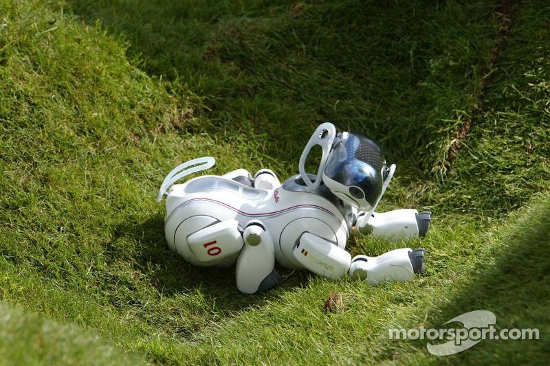 EL Sony Aibo perro robot abajo en la hierba
