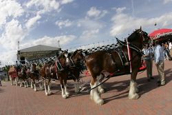 Budweiser Bistro event: a vintage Budweiser delivery carriage