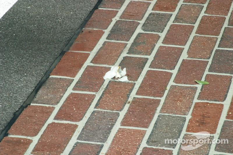 Sam Hornish Jr. Laisse une orchidée sur le sol