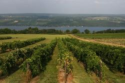 Виноградник в Уоткинс-Глен