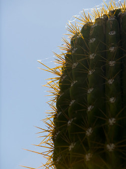 Large cactus grows on a hill which is located between Turns 3 and 4