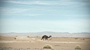 Morocco Rally 2012: Team Red Bull